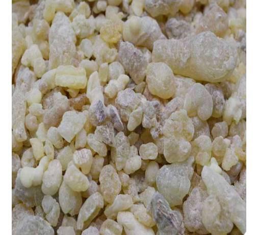 Oliban Oman - Boswellia sacra